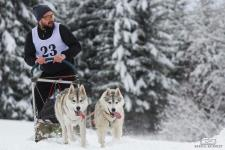 Thursday, February 01, 2018: Dar at sled dog racing