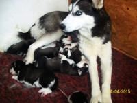 Tuesday, April 14, 2015: Yuta`s mom and puppies