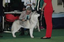 Saturday, April 13, 2019: Azura at CACIB-FCI «Bronze Cup of Stefan the Great 2019» dog show (Moldova, Chișinău)