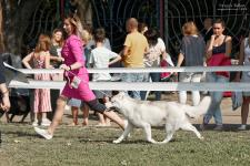 Saturday, September 7, 2019: Paristan at the CACIB-FCI «South-Autumn - 2019» dog show